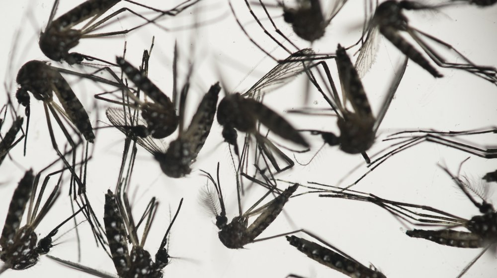 The World Health Organization is meeting to decide whether Zika is a global emergency.