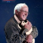 I am Bernie. Bernie is the cat. #PrayForBernie https://t.co/csn2MoOTv6