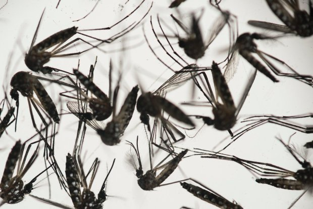 More @CBCNews: ZikaVirus declared emergency by World Health Organization.