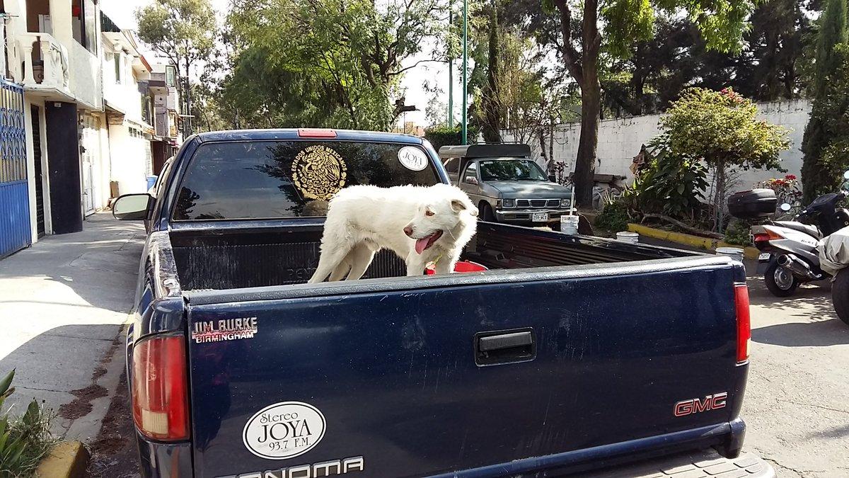 Este perro lleva al menos 2 horas bajo el sol, amarrado al interior de la caja :/ @CulhuacanCTM @SSP_CDMX https://t.co/plTm13akVB