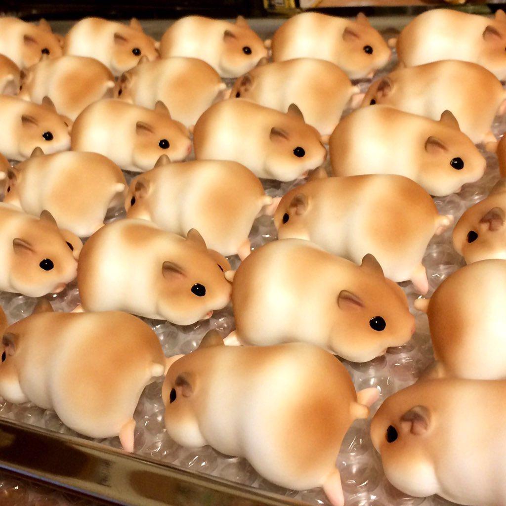 ハムスターの パン  食べにくいね!! https://t.co/Mg35fGrssK
