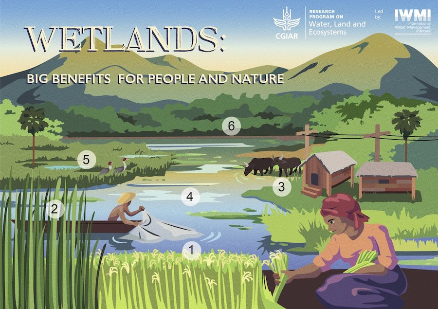 #WorldWetlandsDay #WetlandsForOurFuture download our wetland ecosystem services postcard https://t.co/5zrVQFvlL1 https://t.co/G7U3FA2spN