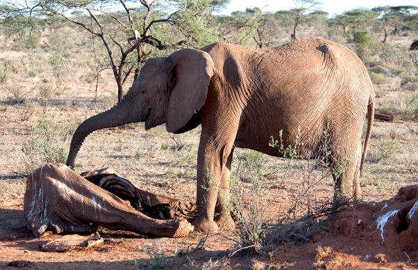 Avaaz steps up its successful PETITION calling on @Yahoo! to stop trade in blood #ivory https://t.co/EA3DGryaM6 https://t.co/B5lFAjRhDC