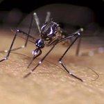 [Infografía] Todo lo que debe saber sobre el mosquito Aedes aegypti transmisor del zika: https://t.co/w9TGZYt7LI. https://t.co/v9g9ALAhmr