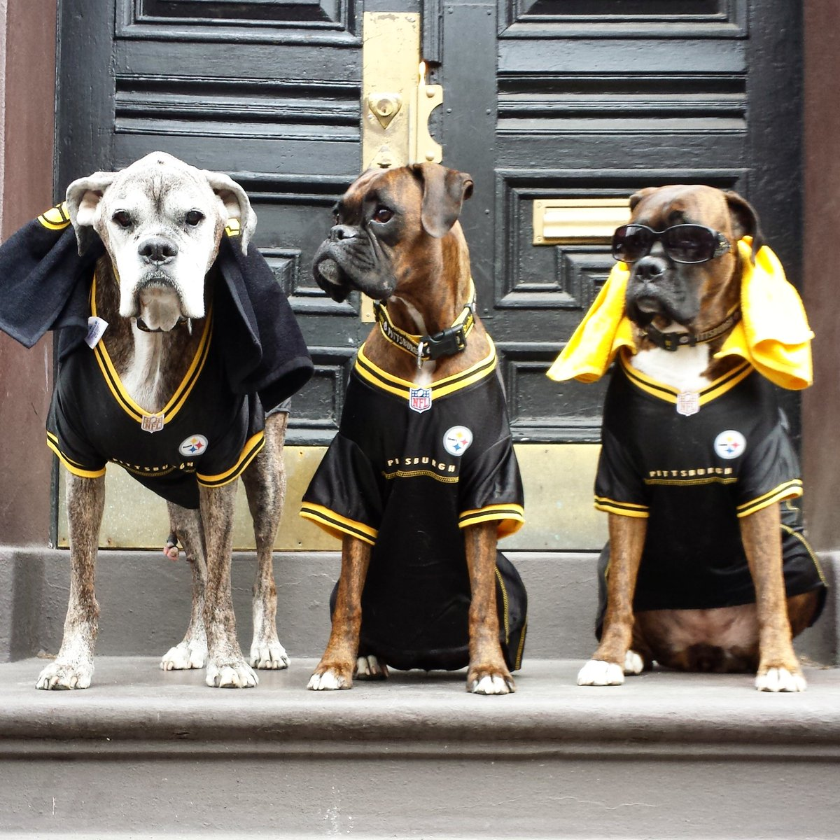 Baddest #Steelers Fans out there! (L-R) Kota is @_BigBen7 , Donut is @DeAngeloRB & Tana is @jharrison9292 #HereWeGo https://t.co/FAmKIV67cA