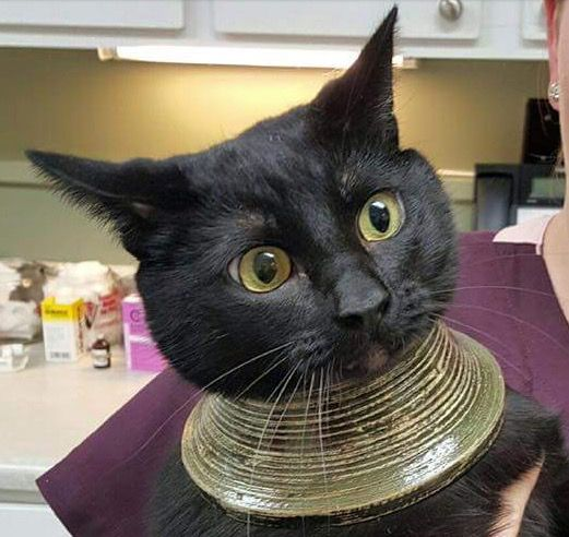 Cat Gets Head Stuck In Vase Ends Up Looking Like Cleo Cat Ra