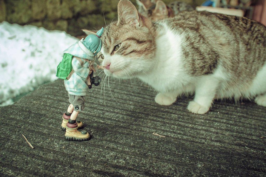 猫も撮りたい https://t.co/yFUdtiU90E