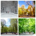 4 seasons in Central Park #NYC by @CentralPark_NYC https://t.co/8KQWkSTzCH