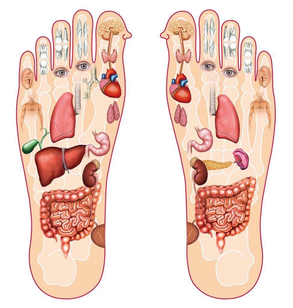 هكذا تبدو علاقة الأقدام باعضاء الجسم. https://t.co/Q3vjpZz7VX