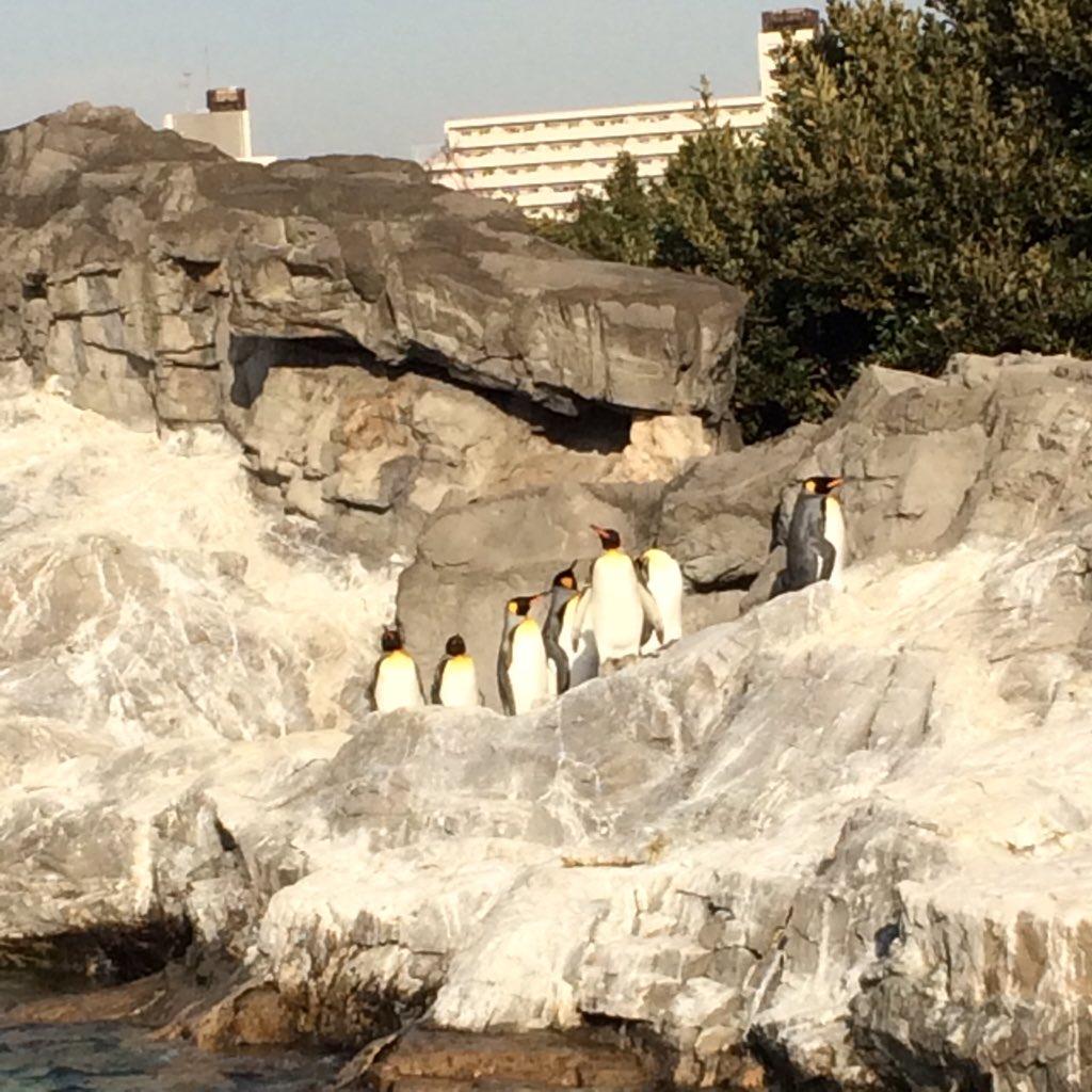 葛西臨海水族園のペンギンさん御一行。 https://t.co/6PzkIhlWS1