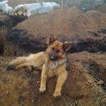 """Боевики """"ДНР"""" едят своих постовых собак и выкладывают фото в """"Одноклассники"""" ПИ3ДЕЦ https://t.co/x4CRUScxdv"""