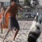 【New!】ブラジルに「 #ネイマール犬 」が登場 きっとあなたより #サッカー が上手い https://t.co/rHFr3uyCdM https://t.co/6g3D5d105L