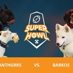 Its game time! Watch the Panthgrrs and Barkos face off for the first-ever #superhowl: https://t.co/jhNO7cxUvb #SB50 https://t.co/cxdTGtfs6s