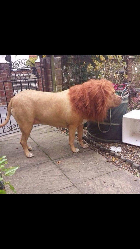 I put a wig on the dog, the new postman shit himself