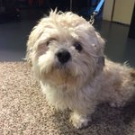 Sweet Tuffs needs a home! Contact @BrightsideAC #inBend https://t.co/ROdiqKGjyW