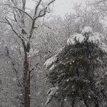 Its snowing now ! #snowday #snowing #snow #Friday #ct https://t.co/4XFwugMvDN