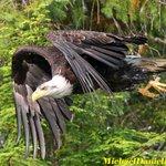 The source for #Canon #wildlife #photography news + rumors #camera #lens analysis. #EOS #EF https://t.co/XVofO0r3s8 https://t.co/uKnawSDULb