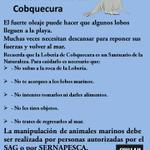 Recomendaciones para proteger los Lobos Marinos de Cobquecura @vigilantecosta @ladiscusioncl @gp_conce @eco_nuble https://t.co/I6uwonpBMv