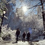 And then the sun came out in @CentralParkNYC to light the snow #newyork #newyorkcity @nyc @newyork @EverythingNYC https://t.co/JkirtYJJ1I