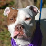 JAKE aka CLUE - A1025289 - TO BE DESTROYED 02/06/16 ***NEEDS A NEW HOPE RESCUE TO ... https://t.co/i0JBTURzAu https://t.co/98fHUzbHSH