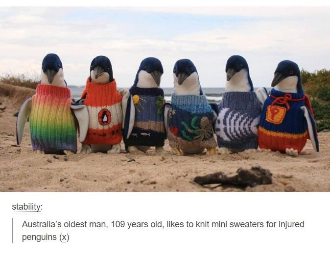 Australia's oldest man, Alfred Date, 109 years old, likes to knit mini sweaters for injured penguins. Hero. https://t.co/ABOuYx4Dy0