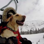 A ride along with Tellurides avalanche rescue dogs: https://t.co/4bw3OV79Ao https://t.co/GDzevQfwy8