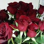Короче ребят)) в этом магазине Голландские Розы самые дешёвые в городе) на 14-е февраля самое то) не благодарите))) https://t.co/EjYGdi5cYR