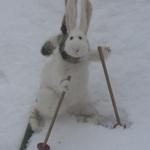 """Je suis un peu dyslexique, à chaque fois que je vois """"ski alpin"""", je lis """"ski lapin"""". Et cest beaucoup plus drôle. https://t.co/3ZPPm3JLyO"""
