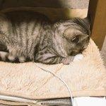 ただいまーーッて、アッ!!猫用ホットカーペットの電源つけ忘れてたねーーッ!!!ごめんねごめんねーーッ!!! https://t.co/SYKRIVW6vA