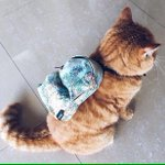 Long weekend lah sayang. Take off your bag. School wont start until Wednesday baby. https://t.co/9F56nw3Vqq