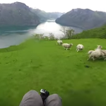 mashable: You could call this one way to herd sheep. https://t.co/S1w90IxhaP https://t.co/thH7cEFXcA #SocialMedia