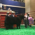 """Grand Champion Steer """"Big Boy"""" sells for $210k at the Sale of Champions to Hillwood. https://t.co/IoO4LRjnnd"""