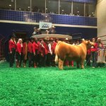 "Reserve Grand Champion Steer ""Goosebumps"" goes to @WSBFW for $170k. https://t.co/JFYBA1ief1"