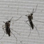 Temas del dia: Aumentan casos de Guillain-Barré en Colombia por el virus del zika https://t.co/KQckaSctpB