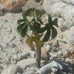 [A orillas del Lago] Aún en la hostilidad del suelo y del clima, la terca plantita se RESISTE al dictamen y VENCE https://t.co/8QfCX6BqIm