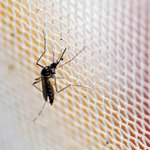 China prepara un ejército de mosquitos de laboratorio para eliminar al virus del Zika https://t.co/UnsjJS2PWL https://t.co/GJG46nVEC6