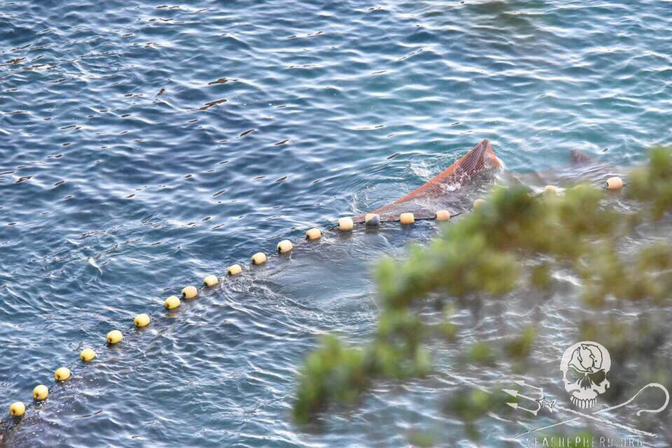 RT @CoveGuardians: 0800am: As the selection process continues, numerous dolphins are seen caught in the nets. #tweet4taiji https://t.co/NsV…