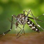 Temas del dia: El mosquito tigre coloniza ya más del 30% de los municipios catalanes https://t.co/ARptVDXQMh https://t.co/JxIU8rBexi