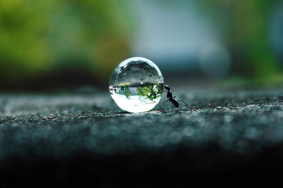 Ant Pushing A Water Droplet | Photography by ©Rakesh Rocky https://t.co/gq5UAKg5qm