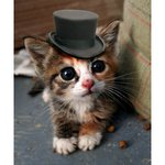 """heres a photo of a kitty in a top hat to take your minds off Chris Christie using the word """"womb"""" #GOPDEbate https://t.co/HgRmySIloP"""