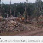 SOS: ¿Qué hay detrás de la tala de árboles en Guaviare? https://t.co/0sD5kBRRF7 vía @ELTIEMPO https://t.co/NJH8KlCvEx