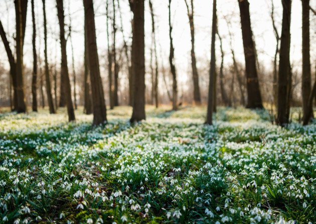 Snowdrops in the Cotswolds: 7 magical places to go @BatsfordA https://t.co/BQGRuNugl8 https://t.co/L6JPOoL1gf