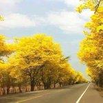 Si todos nos proponemos así podremos arborizar nuestras carreteras. Ver Montería Aeropuerto https://t.co/1Mu9w3NKpQ