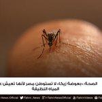 #التحرير | الصحة: «بعوضة زيكا» لا تستوطن #مصر لأنها تعيش على المياه النظيفة https://t.co/U3pCoUSzw3 #tahrirnews https://t.co/JlhV9Pc4rZ