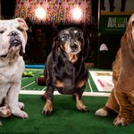 Surviving Members Of First Championship Team Honored During Puppy Bowl Halftime https://t.co/pGYm5d12H9 https://t.co/Td5czPeG7O