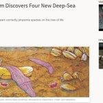 深海ロマン 「紫色の靴下」と呼ばれ分類学上のナゾとされてきた深海生物、実は生物の進化のパズルを埋める重要なピースと判明 - ねとらぼ https://t.co/0Ar8c2gqiK @itm_nlabさんから https://t.co/vqh6iBF0EP