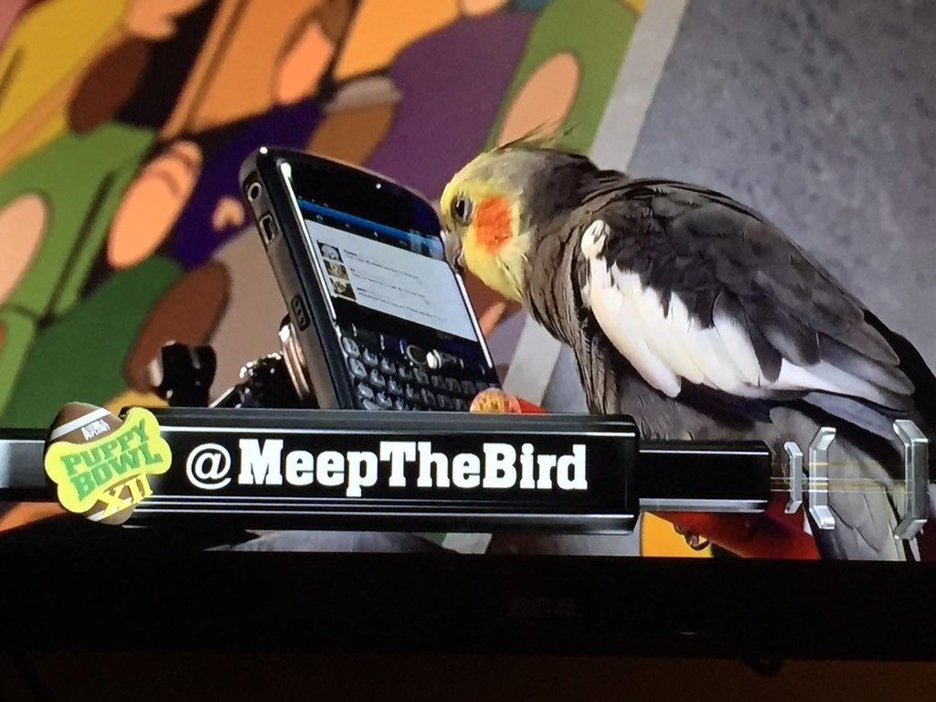 Lol @meepthebird is on top of social media for #PuppyBowl https://t.co/x9Ds84o4Yb