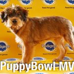 Congrats to Star from Miami-Dade Animal Services who was crowned @AnimalPlanet #PuppyBowl MVP! ????????❤️???? https://t.co/mnqdSPLtc4