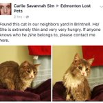 Kitty is looking for her home! #Brintnell #YEG @ABlostPet @ABPetConnect @lostpetyeg @YEGLostPet #catsofinstagram https://t.co/sxMt1DU8Fa