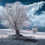 【ウソー】雪景色に見えてしまう幻想的な写真 秘密は赤外線 https://t.co/tPy5IxfGAF 写真はカメラの赤外線機能を使って撮影されたもの。植物の緑は赤外線を反射するため、すべてが白く見えるそうです。 https://t.co/uahaBe6fnI